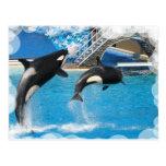 Postal de las ballenas de la orca