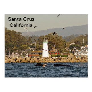 Postal de las ballenas jorobadas de Santa Cruz,