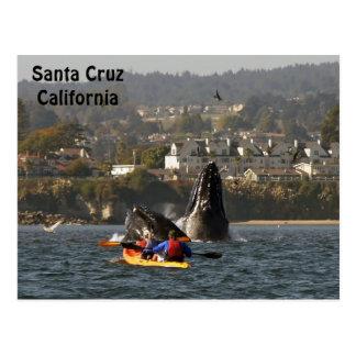 Postal de las ballenas jorobadas de Santa Cruz, Ca
