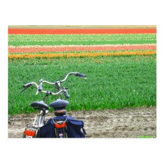 Postal de las bicicletas de los tulipanes de la pr