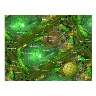 Postal de las células de la planta