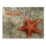 Postal de las estrellas de mar de Antigua