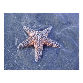 Postal de las estrellas de mar