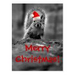 Postal de las Felices Navidad de la ardilla de San