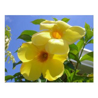 Postal de las flores de trompeta de oro