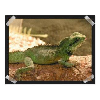 Postal de las fotos de la iguana