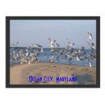 Postal de las gaviotas, ciudad del océano, Marylan