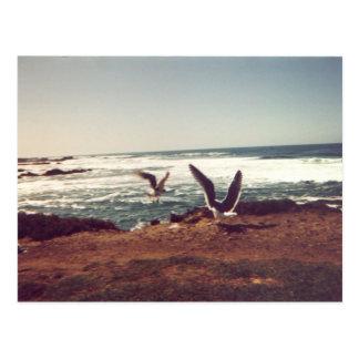 Postal de las gaviotas (en la costa costa de CA)