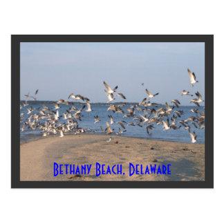 Postal de las gaviotas, playa de Bethany, Delaware