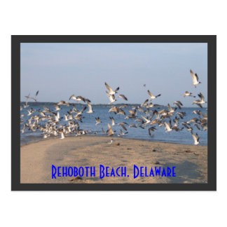 Postal de las gaviotas, playa de Rehoboth, Delawar