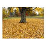 Postal de las hojas de otoño