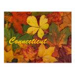 Postal de las hojas de otoño de Connecticut