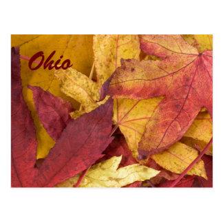Postal de las hojas de otoño de Ohio