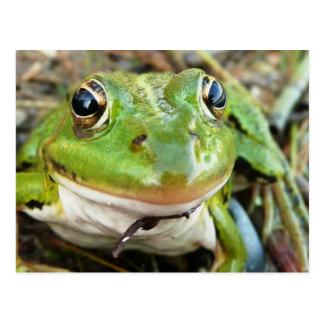 Postal de las imágenes de la rana