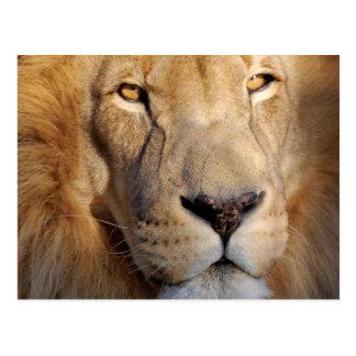 Postal de las imágenes del león