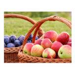 Postal de las manzanas y de los ciruelos