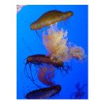 Postal de las medusas