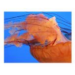 Postal de las medusas de la natación