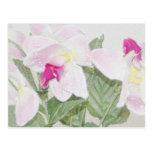 Postal de las orquídeas