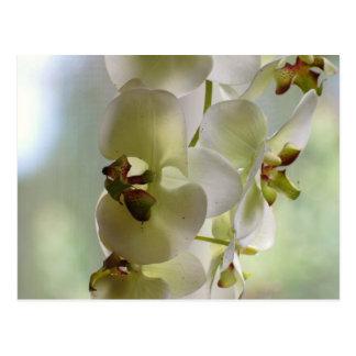 Postal de las orquídeas que cuelga