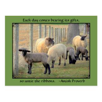Postal de las ovejas, proverbio de Amish. Añada su