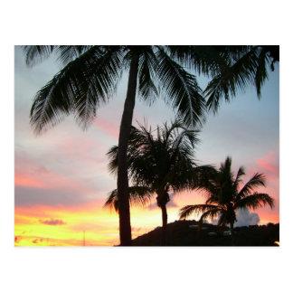 Postal de las palmas de la puesta del sol