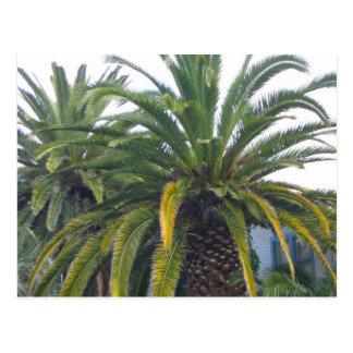 Postal de las palmeras