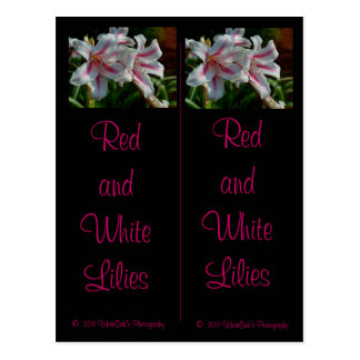 Postal de las señales de los lirios rojos y blanco