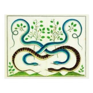 Postal de las serpientes