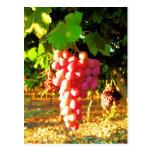 Postal de las uvas de California