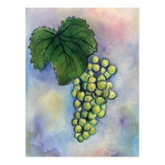 Postal de las uvas de vino de Chardonnay