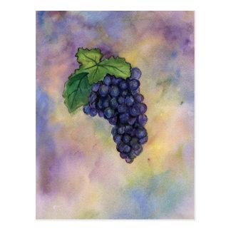 Postal de las uvas de vino del pinot negro