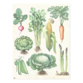 Postal de las verduras del jardín del vintage