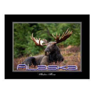 Postal de los alces de Alaska
