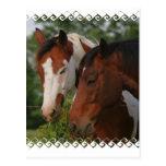 Postal de los amigos del caballo