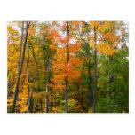 Postal de los árboles de arce de la caída