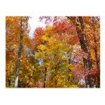 Postal de los árboles de la caída del naranja y de