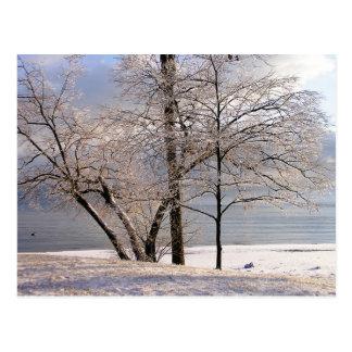 Postal de los árboles del hielo del invierno