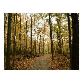 Postal de los árboles del otoño
