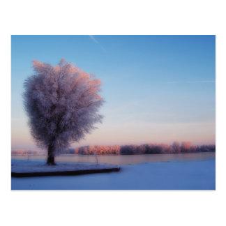 Postal de los árboles Nevado