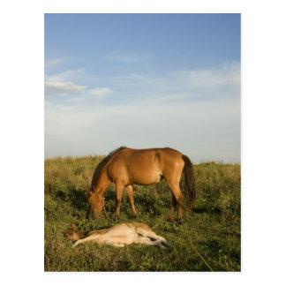 Postal de los caballos de Brown