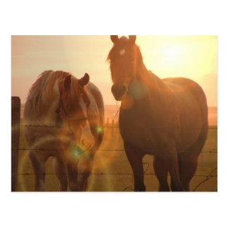 Postal de los caballos de la puesta del sol