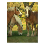 Postal de los caballos de proyecto del Palomino
