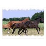 Postal de los caballos salvajes
