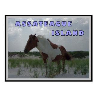 Postal de los caballos salvajes 2 de Assateague