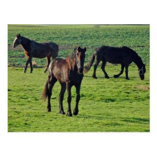 Postal de los caballos