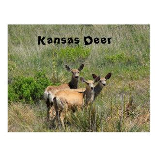 Postal de los ciervos de Kansas