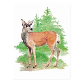 Postal de los ciervos de Whitetailed