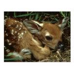 Postal de los ciervos del bebé