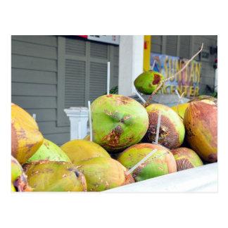 Postal de los cocos de Key West FL del agua del co
